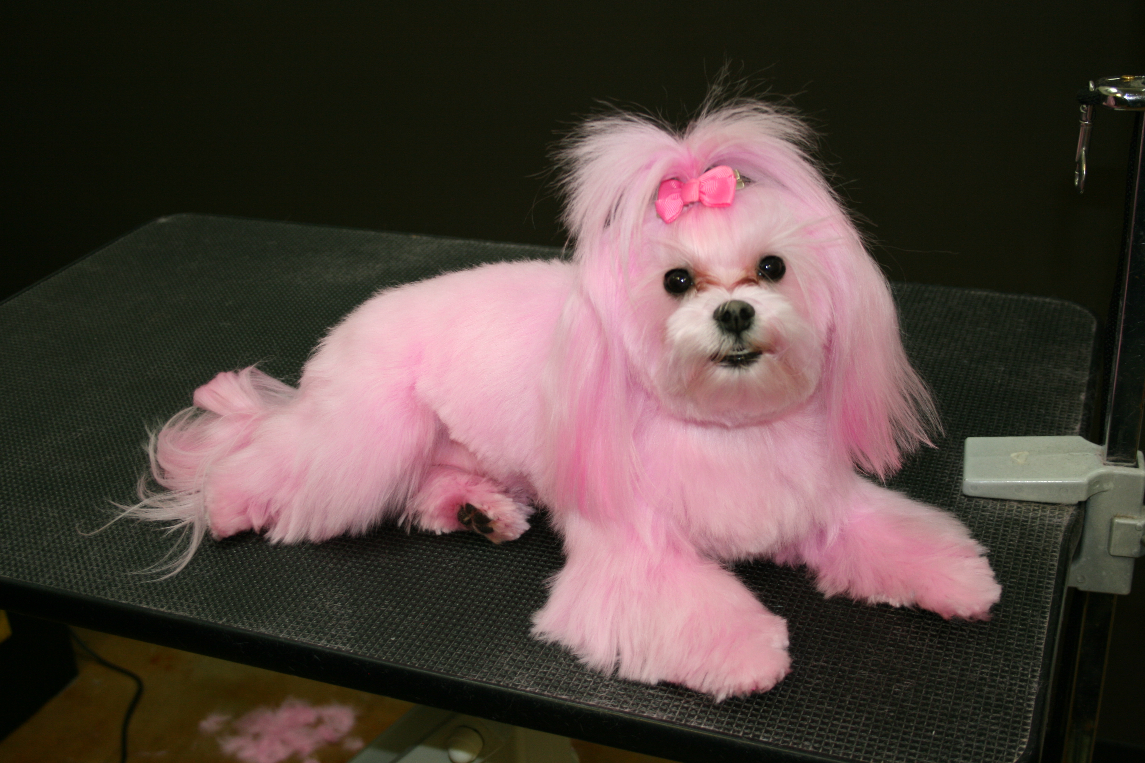 pink puppy to use